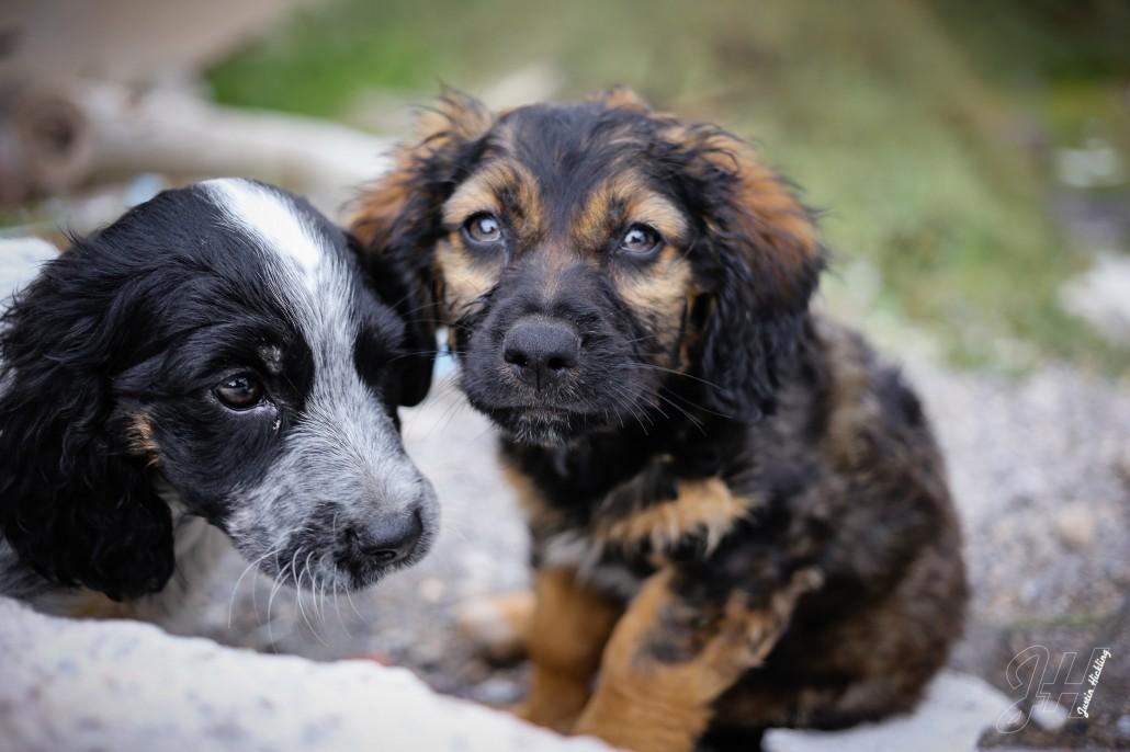Abandoned Pups Santorini